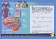 Brain Function for Kids