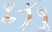 Ballet Anatomy