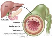 Gallbladder Anatomy