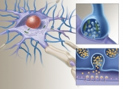 Neuron with Synapse